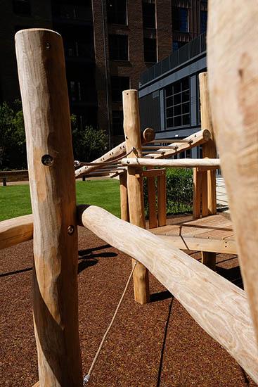 robinia timber