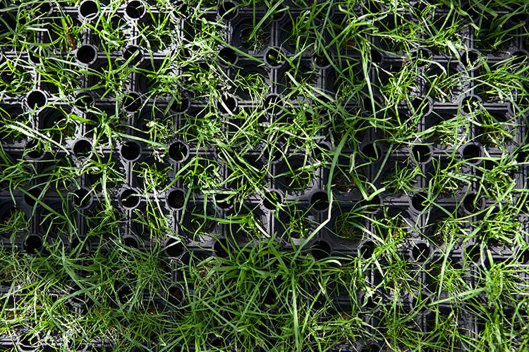 Grass mat safety surface