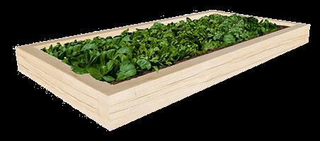 Oak_Planter