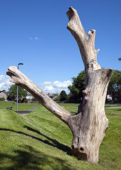 Natural playground log