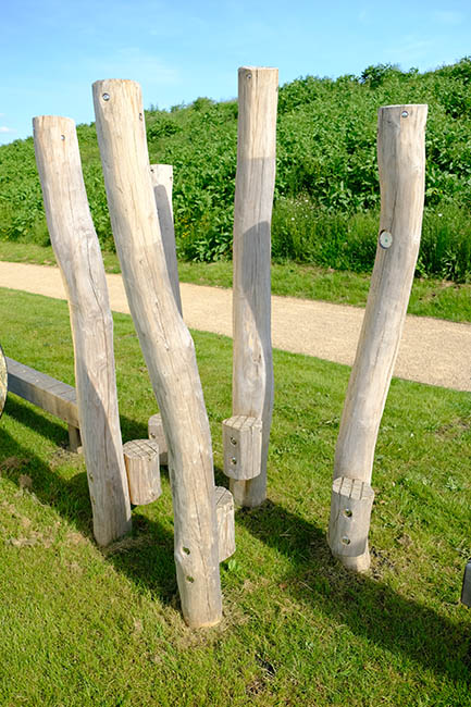 stepping poles robinia photo